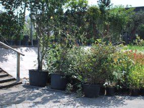 Nombreuses variétés d'arbustes