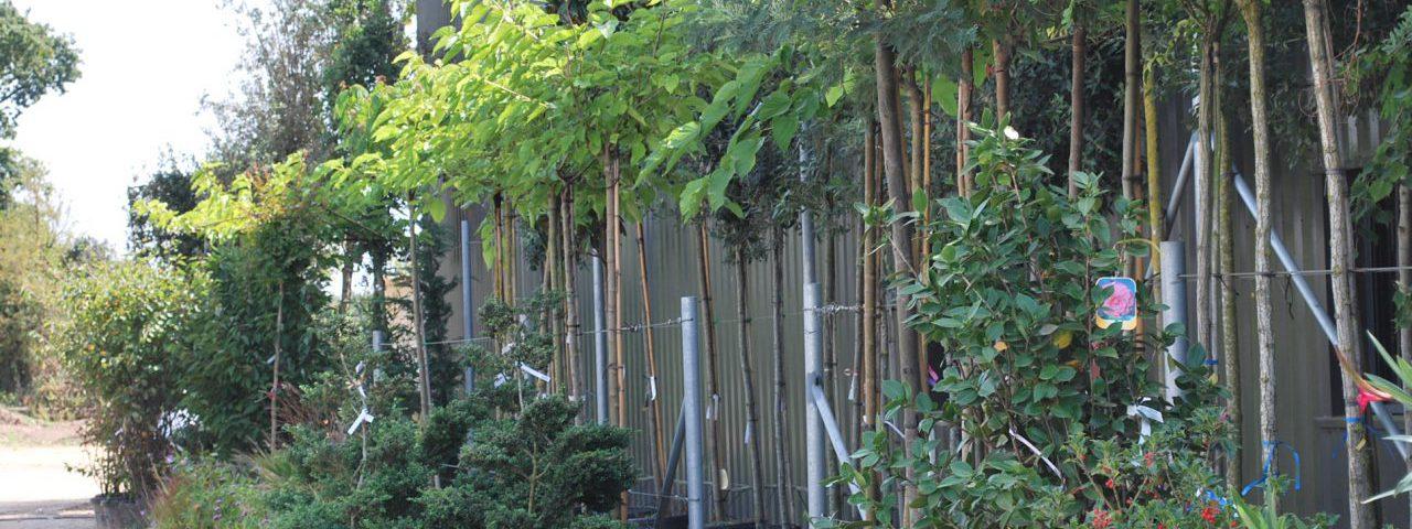 Une grande variétés d'arbres tiges