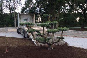Livraison plantation olivier